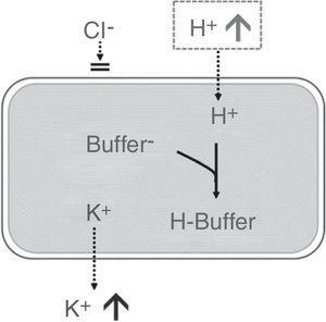 Efecto de la acidosis hiperclorémica sobre la concentración sérica de potasio. Fuente: Modificada de Santi et al.33. Movimiento transcelular de potasio motivado por la entrada de H+ al interior celular, donde se neutralizarán con buffers intracelulares.