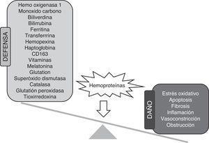Principales mecanismos de defensa y efectos adversos de la acumulación renal de hemoproteínas.