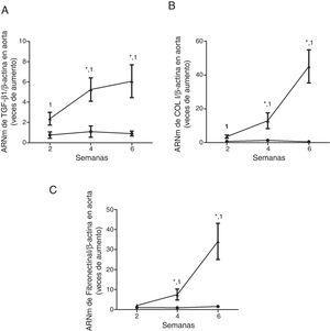 Los ratones con ERC inducida por una dieta rica en adenina presentan un aumento de la expresión de la citocina profibrótica TGF-β1 y de genes de matriz extracelular en la aorta. Los ratones fueron alimentados durante 2, 4 o 6 semanas con la dieta estándar (Control, círculos negros) o con una dieta rica en adenina (Adenina, triángulos negros). Los niveles de ARNm de TGF-β1 (A), colágeno i (COL I, B) o fibronectina (C) en la aorta fueron determinados por RT-qPCR. Los niveles totales de β-actina se determinaron como sus respectivos controles endógenos. Los valores se representan como la media±SEM vs. Control. *p<0,05 vs. 2 semanas, 1p<0,05 vs. Control, al mismo tiempo de tratamiento. n=5 animales/grupo.