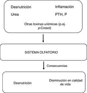 Causas y consecuencias de la afección del sistema olfatorio en los pacientes con enfermedad renal crónica.