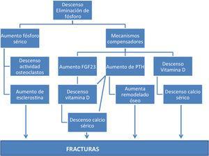 Esquema de las causas conocidas que implican al fósforo como causa de fractura.