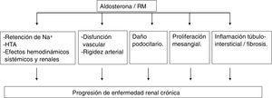 Mecanismos de daño renal producido por la aldosterona y activación del receptor mineralcorticoide (RM).