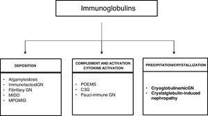 Mechanisms of glomerular toxicity. AIg amyloidosis (immunoglobulin-derived amyloidosis), MIDD (monoclonal Ig deposition disease), MPGMID (proliferative GN with monoclonal Ig deposits), POEMS (polyneuropathy, organomegaly, endocrinopathy, monoclonal gammopathy, skin changes), C3G (C3 glomerulopathy).