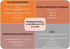 Resumen de factores implicados en la hiporrespuesta a la acción de la hormona paratiroidea (PTH) en la enfermedad renal crónica (ERC). FGF-23: acrónimo inglés del fibroblast growth factor23; PTHrp: péptido relacionado con la PTH; RANKL: acrónimo inglés del receptor activator for nuclear factor κB ligand.