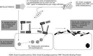 Mecanismo de acción de los betalactámicos.