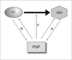 Las interacciones entre la glucoproteína P (PGP) y la infección por el virus de la inmunodeficiencia humana (VIH) son complejas. La PGP parece influir en la infectividad por el VIH y, a su vez, la infección por el VIH altera la expresión de la PGP (a). Por otra parte, algunos antirretrovirales afectan a la expresión de la PGP y, a su vez, la PGP influye en su farmacocinética (b) y farmacodinamia (c).