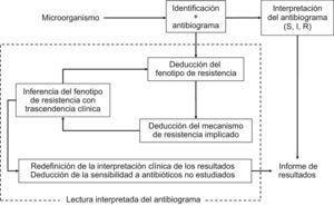 Proceso de interpretación del antibiograma y de la lectura interpretada del antibiograma en el estudio de la sensibilidad a los antimicrobianos en el laboratorio de microbiología.