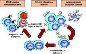 Mecanismos de destrucción de CD4.