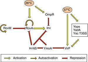 Schematic representation of the regulatory network controlling expression of Inv, YadA, Yops and Ysc T3SS. Repression of these genes is only abolished upon reaching the optimal temperature for expression.