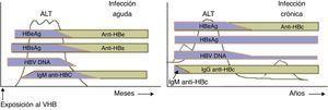 Marcadores analíticos de la hepatitis B en su forma aguda (izda.) y crónica (dcha.). Adaptado de UpToDate (hepatitis B, gráfico 69344).