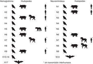 Distribución zoonótica del virus de la gripe A.