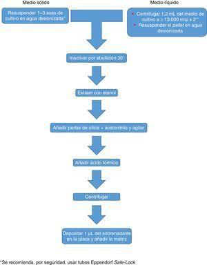 Procesamiento de micobacterias recomendado para el sistema MALDI Biotyper.