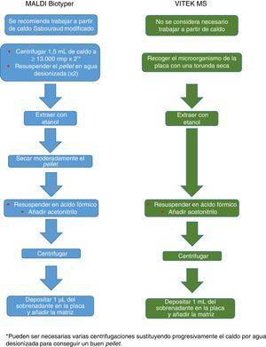 Procesamiento de hongos recomendado para los sistemas MALDI Biotyper y VITEK MS.