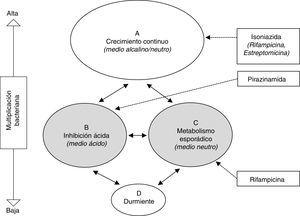 Representación esquemática de las hipotéticas poblaciones bacterianas en la tuberculosis activa y actividad de los antituberculosos28. Las poblaciones B y C (sombreadas) representan las metabólicamente menos activas, sobre las cuales actuan fundamentalmente pirazinamida y rifampicina, respectivamente.