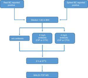 Processing algorithm scheme.