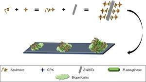 Aptámero anti-P. aeruginosa acoplado a CPX, complejo inmovilizado sobre SWNTs, mostrando el reconocimiento y unión a P. aeruginosa, inhibiendo el crecimiento bacteriano, formación de biopelículas e incluso la degradación de biopelículas establecidas. CPX: ciprofloxacino; SWNTs: nanotubos de carbono.