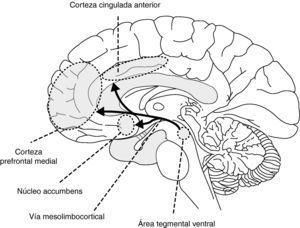 Sistema dopaminérgico de recompensa cerebral.