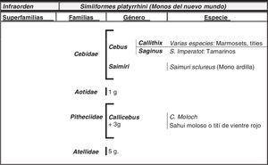 Especies de simios (Suborden Haplorrhini) más estudiados en relación al envejecimiento y la enfermedad de Alzheimer. En la figura se reseñan las superfamilias, familias y géneros de este suborden, así como el número total de géneros (g) dentro de cada familia.