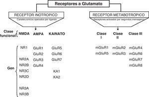 Clasificación de los receptores glutamato.