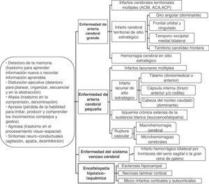 Principales manifestaciones clínicas y grupos patológicos de la demencia vascular. ACM: Arteria cerebral media; ACA: Arteria cerebral anterior; ACP: Arteria cerebral posterior.