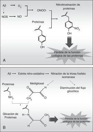 Esquema de la nitrotirosinación (A) y glucación (B) de proteínas inducida por agregados fibrilares de Aβ.