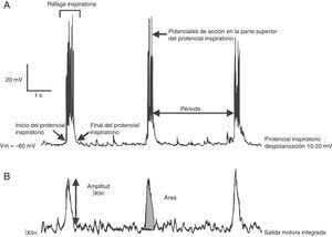Parámetros de estudio en el registro de la actividad eléctrica individual de las neuronas del complejo pre-Bötzinger (superior) y de la actividad poblacional de la raíz del nervio XII (inferior). La actividad de XIIn se registra con un electrodo de succión y se integra.