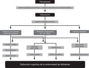 Mecanismos fisiopatológicos que podrían explicar la asociación entre periodontitis y demencia. Modificada de Uppoor et al.33.