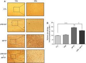 Análisis cuantitativo de la inmunorreactividad de las células de microglía en CE. El panel A muestra la inmunorreactividad a iba-1 de los diferentes grupos de trabajo. El panel B muestra el análisis cuantitativo, los datos representan la media ± desviación estándar de seis experimentos por duplicado. ***p < 0,001, CTL vs. MPTP. *p < 0,05, MPTP vs. URB597 + MPTP.
