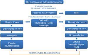 Cronología de actuación ante recién nacido (RN) con monoparesia de la extremidad superior.