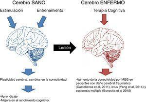 Efectos de la estimulación cognitiva sobre el cerebro sano y enfermo.