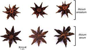 Similitudes entre los frutos del I. verum e I. anisatum5.