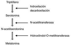 Síntesis de la melatonina a partir del triptófano.