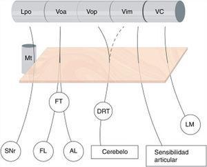 Subdivisión del tálamo motor y sus aferencias. Se ilustran las conexiones aferentes al tálamo ventral. Nótese que dichas proyecciones atraviesan el área subtalámica posterior – recuadro naranja-, y están íntimamente relacionadas con el haz mamilotalámico en su parte más anterior. No existe una clara división de las aferencias cerebelosas que llegan a través del tracto dentato-rubro-talámico hacia Vop y Vim, mientras que la frontera entre tálamo motor y sensitivo (VC) está bien delimitada. AL: Ansa Lenticularis; DRT: Tracto Dentato-rubro-talámico; FL:Fasciculus Lenticularis; FT: Fasciculus Thalamicus; LM: Lemnisco Medial; Lpo: Lateropolaris; Mt: Haz mamilo-talámico; SNr: Sustancia nigra pars reticulata; VC: Ventro Caudalis; Vim: Nucleus Ventralis intermedius; Voa: Ventralis oralis anterior; Vop: Ventralis oralis posterior.
