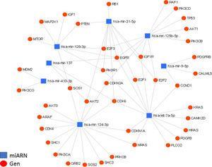 Interacción de los miARN con sus genes blanco. Diagrama de interacción de miARN y su regulación de genes blanco, generado mediante la plataforma online miRNet; en él se muestran las interacciones entre los 8miARN descritos y sus genes blanco. Se presentan un total de 36 genes blanco para los 8miARN en glioma, todos agrupados en nodos de interacción miARN-gen, con un valor de afinidad de 8.31e-11. Destacamos la regulación de los genes EGFR y CDK6. En el caso del gen EGFR, se encuentra regulado por al menos 5de los miARN aquí descritos (miR-21, miR-125, miR-137, miR-128 y let-7); este factor de crecimiento se encuentra generalmente sobreexpresado en GBM y es, en parte, responsable del aumento en la proliferación celular, así como de la evasión de la apoptosis. En el caso del gen CDK6, está siendo regulado por 4miARN (miR-124, miR-137, miR-21 y let-7); este gen también se encuentra incrementado en GBM y es asociado a un aumento en la proliferación, la migración y la invasividad tumoral.