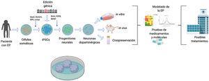 Diagrama descriptivo de generación de modelos de células troncales pluripotentes inducidas (iPSC) para la enfermedad de Parkinson (EP). Los modelos de la EP utilizando la tecnología de iPSC comienzan con la obtención de células somáticas de pacientes con la EP. Una vez que se establecen los cultivos de células somáticas, p. ej. fibroblastos, se procede a realizar la reprogramación celular para obtener iPSCs utilizando vectores, p. ej. Sendai, lentivirus, retrovirus y los factores de transcripción, Oct3/4, Sox2, c-Myc y Klf-4. Consecuentemente a la reprogramación celular exitosa, se dirige la diferenciación hacia el destino neuronal dopaminérgico adicionando factores de transcripción, p. ej. Sonic Hedgehog, factor de crecimiento de fibroblastos 8, factor neurotrófico derivado del cerebro. Adicionalmente, en el estado pluripontente las iPSC pueden estar sujetas a modificaciones genéticas para sobreexpresar o inhibir genes de interés clínico. Finalmente, las neuronas dopaminérgicas generadas son utilizadas como modelo de la EP y realizar estudios in vivo, in vitro o criopreservación para su futuro uso, dirigiendo al descubrimiento de futuros tratamientos.