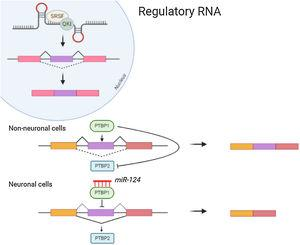 Both protein expression and splicing can be affected by the regulatory RNA like long non coding and micro RNA.