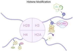 Methylation at H3, ubiquitylation at H2A and acetylation at H4 are the modifications in histone found in HD.