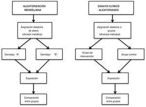 Comparación entre un estudio de aleatorización mendeliana y un ensayo clínico aleatorizado.