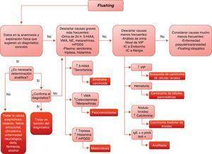 Algoritmo diagnóstico ante un paciente con flushing. (5-HIAA: ácido 5-hidroxiindolacético&#59; IC: interconsulta&#59; IgE: inmunoglobulina E&#59; mPGD2: metabolitos de la prostaglandina D2&#59; NE: norerepinefrina&#59; VIP: péptido intestinal vasoactivo&#59; VMA: ácido vanilmandélico).