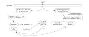 Principales eventos que podrían intervenir en el mecanismo patogénico de las lesiones cutáneas de LE.