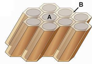 Representación esquemática de la estructura del esmalte dental con prismas del esmalte (A) y esmalte interprismático (B).