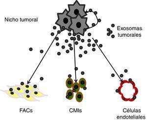 Comunicación paracrina mediante exosomas tumorales entre las propias células cancerosas y los diferentes tipos celulares del microambiente tumoral: fibroblastos asociados a cáncer (FACs), células mononucleares inflamatorias (CMIs) y células endoteliales.