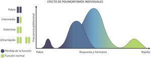 Distribución de los fenotipos y genotipos de metabolizadores según el efecto monogénico de CYP450. Se observa que la mayor parte de la población hispana posee un fenotipo metabolizador extensivo o intermedio, mientras que solo una pequeña parte de la población posee fenotipos de metabolizadores pobres o ultrarrápidos.