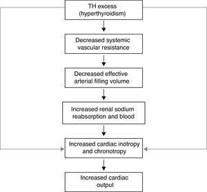 Increase in cardiac output mediated by TH excess.