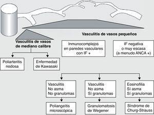 Clasificación de las vasculitis. ANCA: anticuerpos anticitoplasma de neutrófilo&#59; IF: inmunofluorescencia. (Tomada de Gómez-Román3).