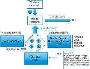 Orígenes y vías neurológicas del reflejo de la tos.