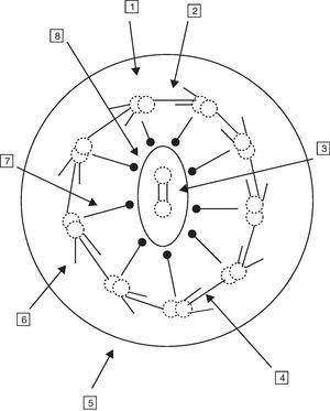 Ultraestructura del axonema. 1. Doblete de microtúbulos. 2. Uniones de nexina. 3. Puente de conexiones. 4. Brazo interno de dineína. 5. Membrana ciliar. 6. Brazo externo de dineína. 7. Radiaciones. 8. Microtúbulos centrales y membrana central.