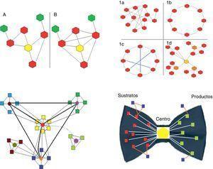 Panel superior-izquierda. Se representan 2 redes biológicas con su correspondiente nodo central (amarillo) y distinto coeficiente de agrupamiento: la red A es de 2/5 (2 conexiones de las 5 potencialmente posibles); la red B es de 1 (todas las conexiones posibles están presentes). Panel superior-derecha. Se representan los 4 tipos principales de redes (diagramas de grafos). Los hexagonales representan los nodos y las líneas las conexiones. 1a, red aleatoria: las conexiones entre los nodos se establecen al azar. 1b, red regular: todos los nodos tiene el mismo número de conexiones (en el ejemplo es 2). 1c, red de mundo pequeño: es similar a la red regular pero existen «caminos» más cortos que se representan con las líneas azules. 1d, red libre de escala: existen nodos que son más importantes pues reciben más conexiones (en el ejemplo el amarillo es el nodo más importante, y los naranja tienen una importancia un poco menor) y se establecen subgrupos independientes. Panel inferior-izquierda. Se representan los sistemas biológicos. Son redes libres de escala con características particulares, en especial la presencia de módulos relativamente independientes y una organización jerárquica. En el esquema se representan el origen de la red en el módulo «amarillo» central, que es jerárquicamente el superior y por tanto el de mayor número de conexiones. Otros 3 (celeste, verde y azul) corresponden a módulos de menor jerarquía, que podrían vincularse a determinadas funciones. Por último, el módulo marrón, que es el de menor jerarquía. La mayoría de las especies conservan los módulos de mayor jerarquía (en este caso el amarillo), pues están vinculados a procesos esenciales para la vida. Contrariamente, los módulos de menor jerarquía, por ejemplo el marrón, son los que explican la diferencia entre las especies y los que permiten la adaptación a circunstancias o ambientes particulares. En verde se representa un módulo cuyo encendido o apagado depende de un patrón temporal o ambiental