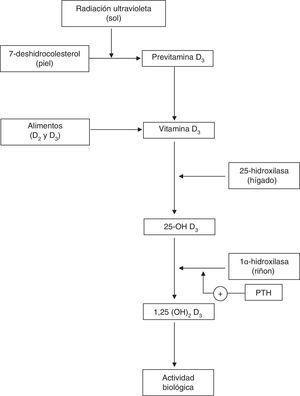 Metabolismo de la vitaminaD.