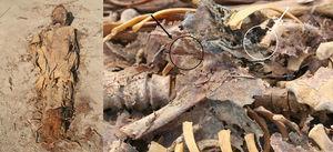 En la imagen de la izquierda se observa la momia previa a su apertura. En la imagen de la derecha se puede ver (flecha blanca) el pulmón y (flecha oscura) el pilar del diafragma.